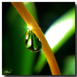 waterdroplet2